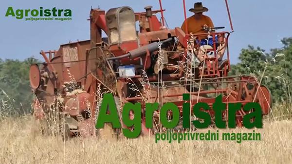 Agroistra